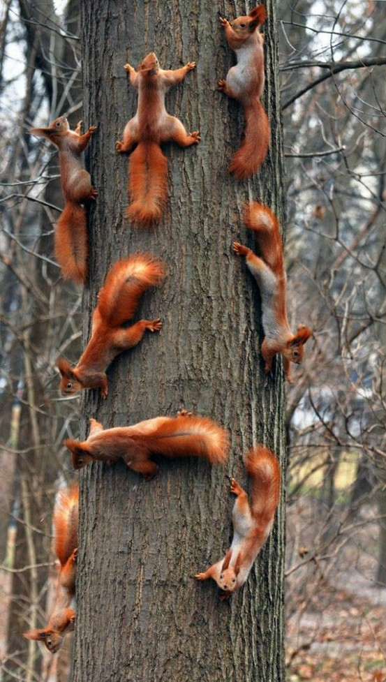 squirrels climbing